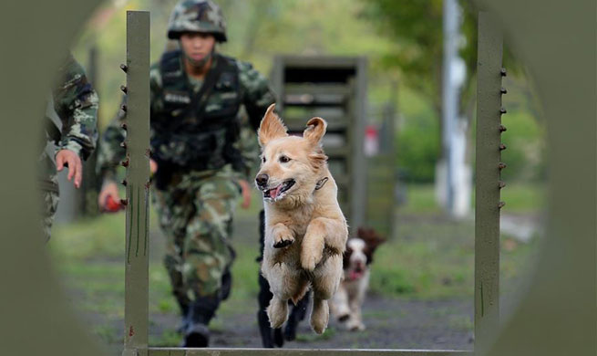 Police dogs trained at training base in SW China