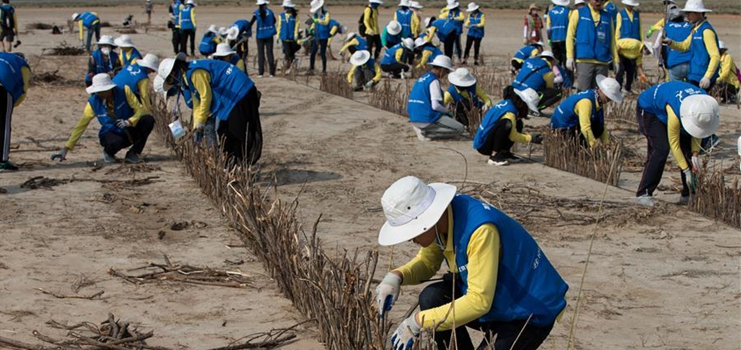 College volunteers join desert control activity in China's Inner Mongolia