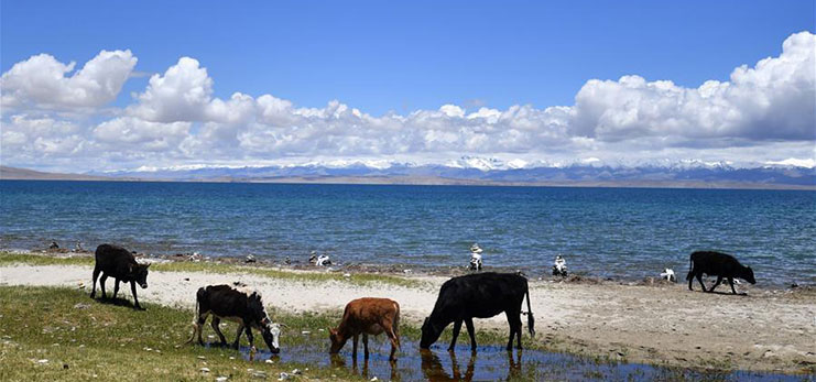 Scenery of Mapam Yumco Lake in southwest China's Tibet